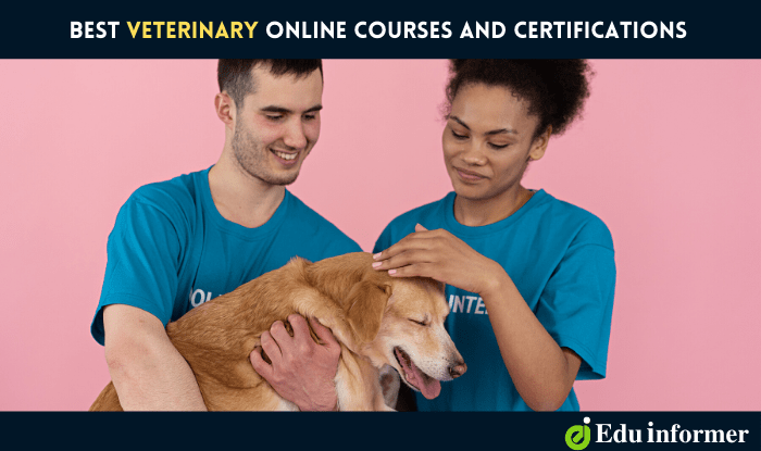 Best Veterinary Online Courses and Certifications in 2021